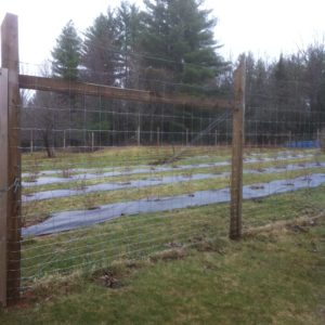 7' Woven Wire Deer Fence with High Tensile Electric