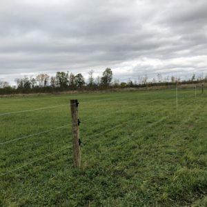 Dairy Pasture